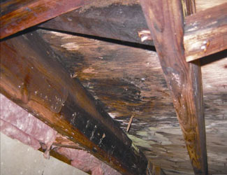 mold and rot in a Ames crawl space